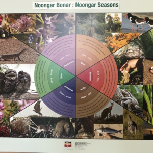 Noongar Bonar (Noongar Season A2  42.0 cm x 59.4 cm Poster on Card)