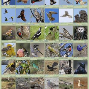 A1 Land Birds Poster